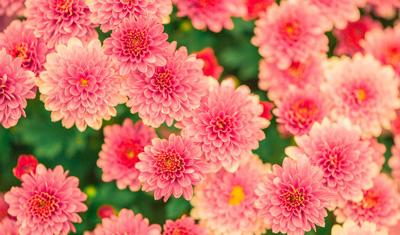 flowers-482575_1280-2