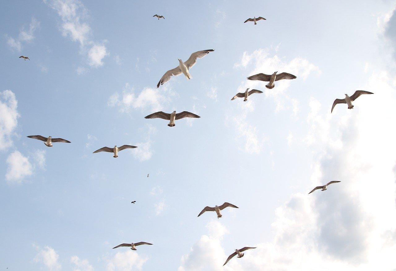 seagulls-3991744_1280